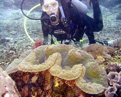 The Giant Clam can weigh more than 440 lb, measure as much as 47 in across, and have an average lifespan in the wild of 100 years or more.