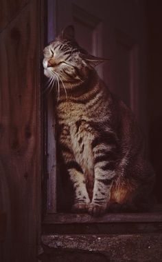"""Tabby Cats Grey * * """" I've acquired a strange affection fur dis doorway; so I willz mark it by smooshing my face on it. Nowz it's official. Pretty Cats, Beautiful Cats, Animals Beautiful, Cute Animals, Beautiful Pictures, Cool Cats, I Love Cats, Crazy Cat Lady, Crazy Cats"""