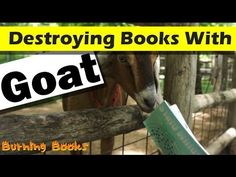 I'm back with another convoluted way to destroy books. Once again I took to Facebook to ask for some suggestions about how best to destroy a book. This time: A goat. I'm with you, I never thought of a goat as much of a destruction machine, but apparently Amanda Gowin does. Watch as some very finicky goats refuse the delicious meal I offer them.  Book destroyed: Radium Girls by Amanda Gowin. Buy it!: http://www.amazon.com/Radium-Girls-Amanda-Gowin/dp/0692211683