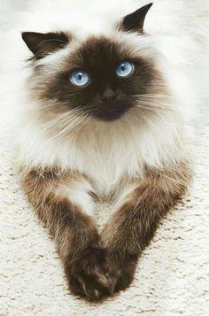 ゴロゴロするのが大好きな猫♪|おじゃかんばん『キュートな猫の写真日記』