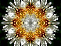kalesymplanc by kalephytoscope, via Flickr