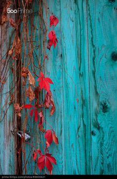 Turquoise Autumn by Sergiu Chirila   500px Prime