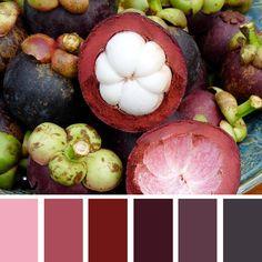 Mangostino Color Palette