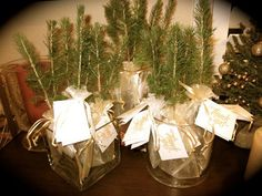 Christmas seedlings for Holiday party favor