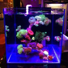 #aquarium #reef #coral #saltwater #اکواریوم #水族館 #수족관 #Akvaryum #Akvarium #Аквариум #Acquario Saltwater Aquarium Setup, Turtle Aquarium, Coral Aquarium, Saltwater Fish Tanks, Marine Aquarium, Diy Aquarium, Aquarium Fish Tank, Fish Aquariums, Aquarium Ideas