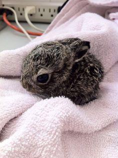 Cute bunny in ICU