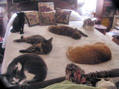 From the Archives: Everyone on the Bed, June 12, 2007