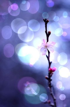 Bokeh / soft and subtle images Bokeh Photography, Photography Projects, Levitation Photography, Exposure Photography, Winter Photography, Abstract Photography, Photo Bokeh, Beautiful Flowers, Beautiful Pictures