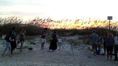 Tybee Island – Jen (aka Jane) on WordPress Turtle Hatching, Tybee Island, Vineyard, Places, Georgia, Outdoor, Watch, Outdoors, Clock