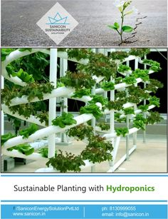 #Hydroponics means working water. It is a process of growing vegetation in mediums other than soil and dirt such as sand, liquid or even gravel. This system consists of growing chambers or trays where #plants are potted. Sanicon Sustainability Solutions specializes in creating designs that not only support and promote the vegetation growth but is also aesthetically designed. We provide specialized #sustainable planting with Hydrponics. See more details:http://sanicon.in/