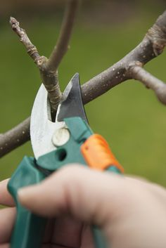 Fruitboom snoeien - Fruitbomen snoeien (video)