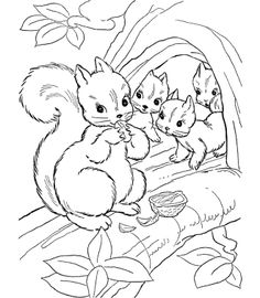 Squirrel Coloring Page  ZenArt  Pinterest  Coloring Coloring