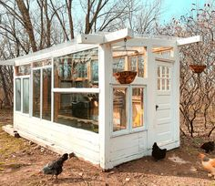 A Wisconsin couple turned discarded windows and doors into a greenhouse for organic plants. Diy Greenhouse Plans, Backyard Greenhouse, Small Greenhouse, Backyard Landscaping, Old Window Greenhouse, Old Windows, Windows And Doors, Large Windows, Outdoor Spaces