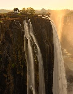An elephant walks up to the edge of Victoria Falls in Zambia, Africa (Photo by Marsel van Oosten.)