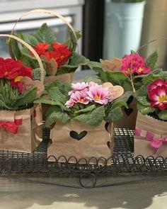 Valentines Day Plant Gift ..