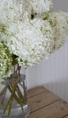 ...white hydrangea