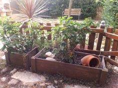 Rosales en jardineras de madera