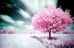 Collection of beautiful tree photos
