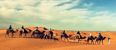 Majestic Sahara Tours | Morocco Private Tailored Tours | Home Camel, Tours, Animals, Morocco, Animales, Animaux, Camels, Animal, Animais
