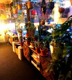 Uusia kukkatasoja olohuoneeseen. Bonsai, Gift Wrapping, Gifts, Gift Wrapping Paper, Presents, Bonsai Trees, Bonsai Plants, Gifs, Gift Packaging