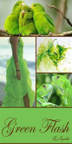 """Good Evening Ladies.  Thank you for all the pretty pins today.  Tonight and tomorrow let's pin this color board """" GREEN FLASH """" Pantone's Spring Color for 2016.  Have fun. ❤"""