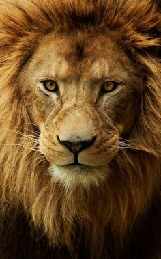 .The King of beasts.