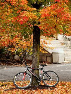 Bike at Sturges Hall SUNY Geneseo