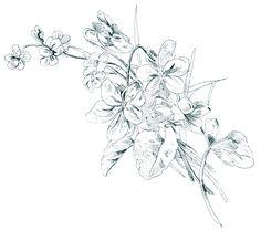 Old Design Shop ~ free digital image: vintage floral sketch
