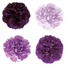purple carnations - Florigene carnations in lovely shades of blue-ish purple from pale lavender to deep eggplant