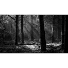 Marlike Marks | Drenthe