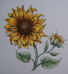 Drawing Tips sunflower drawing Sunflower Colors, Sunflower Art, Sunflower Tattoos, Sunflower Paintings, Sunflower Design, Sunflower Sketches, Sunflower Drawing, Sunflower Illustration, Marker Kunst