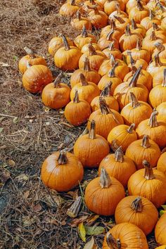 Spine-tingling ghost stories and frightfully debauched parties, here's our pick of the best Halloween events in London this year Pumpkin Run, Pumpkin Picking, Scary Scarecrow, Best Pumpkin Patches, Pumpkin Carriage, Farm Shop, Autumn Aesthetic, Gourds, Good Things