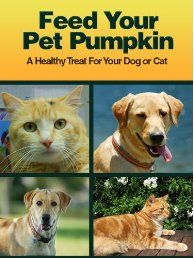 Feed Your Pet Pumpkin by Delorse Mays.     Lately, it appears that there is one unusual fad – feeding pumpkin to your dog. This fad is not just one that you will indulge in during the fall especially after Halloween. It actually is a good idea to feed pumpkin to your dog. And I know that you would be surprised that this mushy, mostly unpalatable canned or fresh vegetable - at least to me…vegetable is good for your pet. Click The Pic To read More!