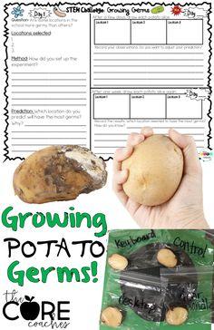 Grow germs on potato
