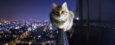 i love cats: Photo I Love Cats, Crazy Cats, Cool Cats, Animals And Pets, Funny Animals, Cute Animals, Face Chat, Cat City, City Kitty