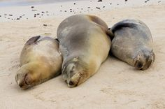 Lounging in the Galapagos