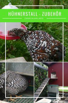 die 19 besten bilder von h hnerstall einrichtung in 2019 chicken coop garden chicken coops. Black Bedroom Furniture Sets. Home Design Ideas