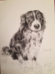 Drawing of a lovely Collie called Holly, by me :)