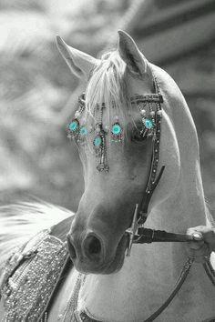 Turquoise ✔️
