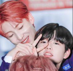 🐣Son Dong Pyo 🐱Lee Jinwoo 🐹Song Hyeong Jun + Oneshoot + Information about Produce x 101 Lee Dong Wook, Korean Boy Bands, Produce 101, Mingyu, Fujoshi, Jonghyun, Asian Boys, Debut Album, Season 4