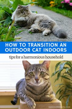Cat Care Kittens Whether you're adopting a stray or moving from a house to an apartment - here are our top tips to help transition an outdoor cat indoors I Love Cats, Crazy Cats, Cat Toilet Training, Kitten Care, Cat Care Tips, Pet Care, Outdoor Cats, Indoor Outdoor, Feral Cats