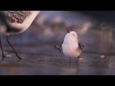"Amazing new short film by Pixar ""Piper"". This one has amazing animation and a great story! Very funny too! This one is one of my new favorites!"