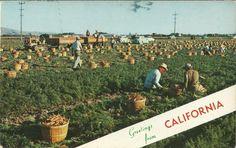 USA Postcard (2)