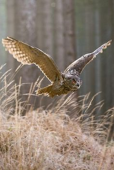 Owls are so incredible. The BIG BIRDS!!!! So many don't realize how big these beauties really are!!!!