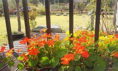 깊어지는  쓸쓸한!~가을날에 ~ 싱싱함을 선물한 한련화!~ 그리운  풍경!!