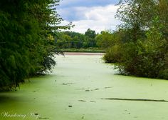 Moss-covered lake at Hawthorn Park in Vigo County Indiana captured by Wandering Ways Photography 2016