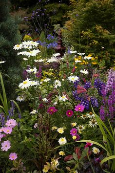 Perennials Lower Garden Summer. English garden for all seasons. Four Seasons Garden, Walsall, West Midlands, UK