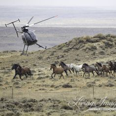 Last Chance to Call Congress to Save Our Wild Horse and Burros on Take Action Tuesday  Congress is set to vote this week on the […]
