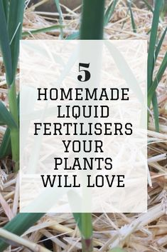 Companion Gardening 5 Home Made Liquid Fertilisers Your Plants Will Love - Home Grown Happiness Home Made Fertilizer, Fertilizer For Plants, Liquid Fertilizer, Growing Tomatoes In Containers, Growing Vegetables, Organic Soil, Organic Gardening, Vegetable Gardening, Companion Gardening
