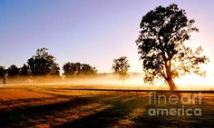 Misty Morning At The Racecourse by Lexa Harpell